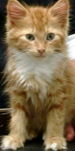 a pet kitten