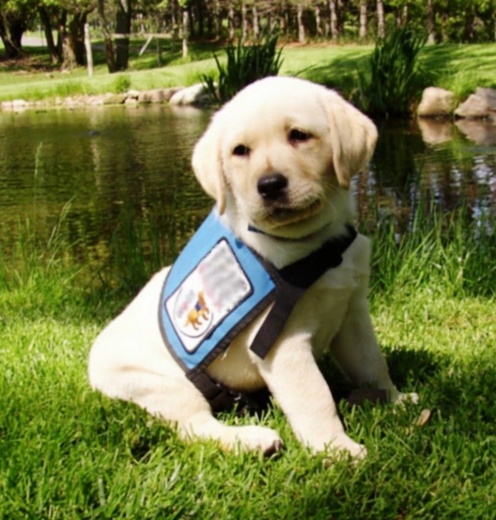 Why A Dog Is Good For Kids With Disabilities