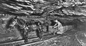 boy driving mule wagon in coal mines