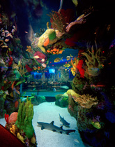 Fish Exhibit Aquarium Restaurants